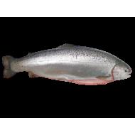 Fresh Trout - Atlantic Air-Flown Sashimi Grade