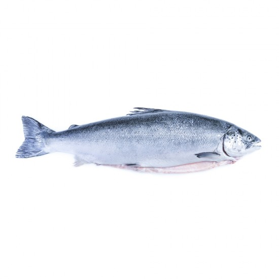 Kanika Frozen Atlantic Salmon Whole Fish Fillet Cut Boneless 4.5kg(+-)