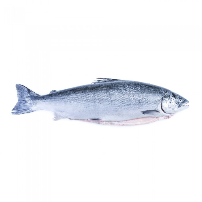 Kanika Frozen Atlantic Salmon Whole Fish Block Cut 4.5kg(+-)