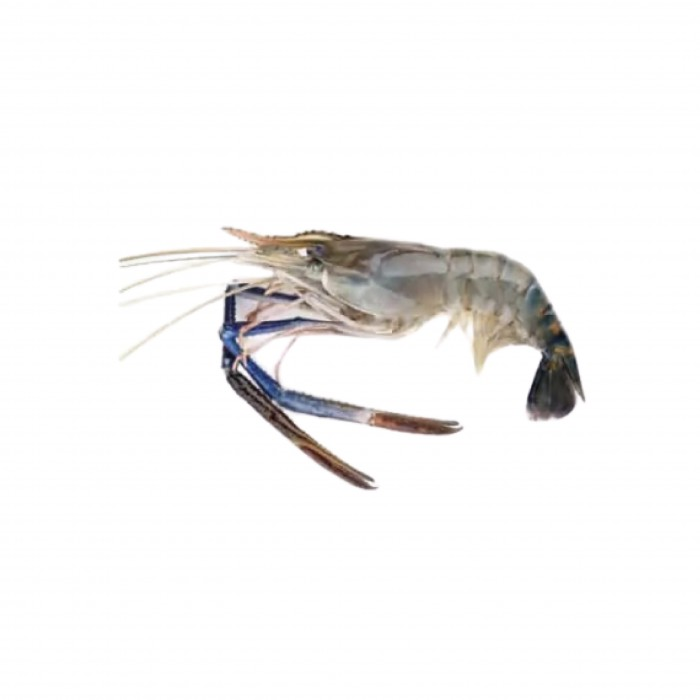 Scampi U5 - India Fresh water Prawn